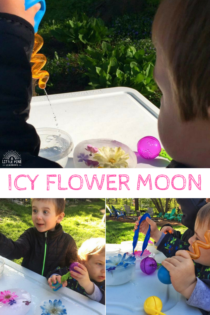 Celebrate May's Flower Moon with your little nature lover. Your child will love these flower activities!