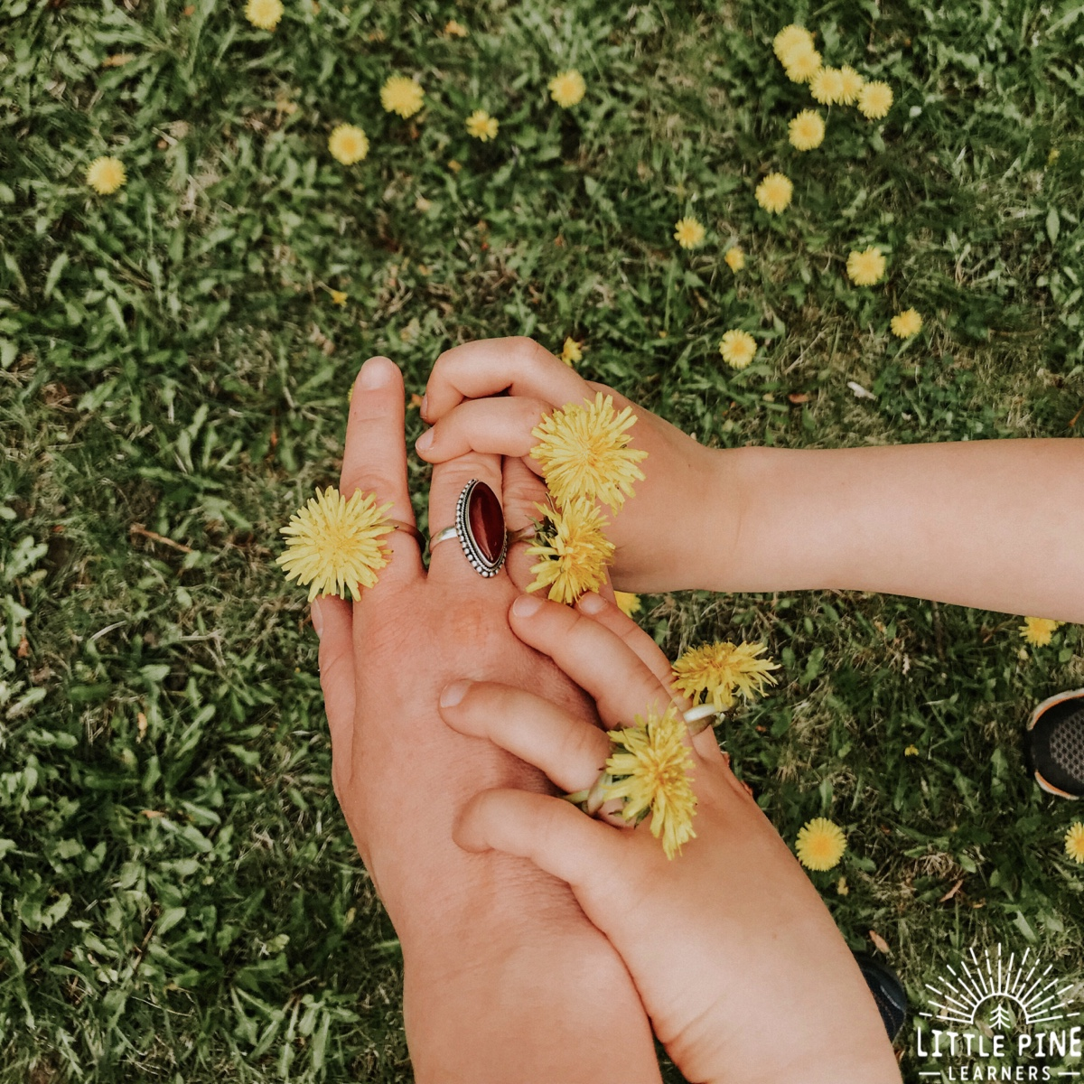 When I look back on my childhood, the simple activities stick in memory like glue.  Oftentimes, those activities are the ones that brought endless hours of enjoyment and entertainment. When spring arrived and those first dandelions popped up, I was outside crafting and playing with them all day long! The craft that I looked forward to the most every spring, was the classic dandelion ring. Read on to learn two simple ways to make dandelion rings!
