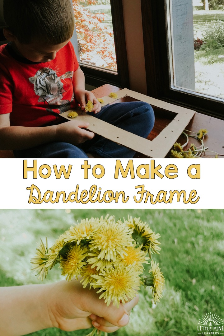 If you love dandelion crafts, I have a really unique and adorable idea for you! You only need a few supplies and can feel great about repurposing cardboard for this simple nature craft. This dandelion frame would make a great Earth Day craft, Mother's Day gift, or a cute decorative piece to display your crafts or photos in your home.
