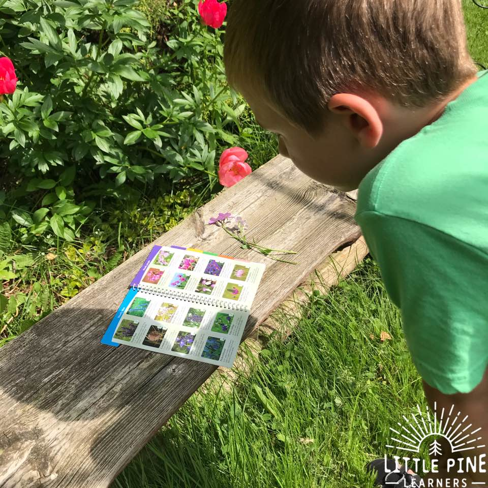 Are you looking for a fun and hands-on way to learn wildflower identification with your kids? Try this activity to get kids outdoors and identifying these beautiful pieces of nature. Whats the best part?! When you are finished, you will have a beautiful piece of nature art for your home!