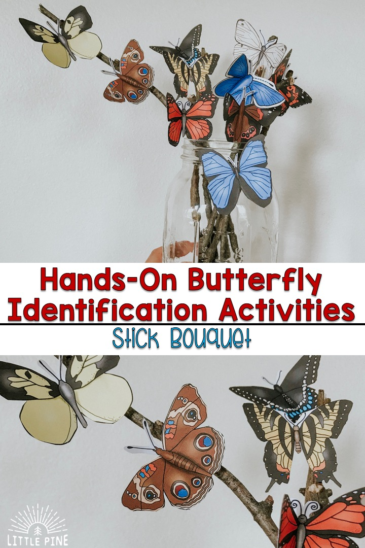 Find fun and hands-on butterfly identification activities for kids here! Click on the post to see our giant butterfly identification chart, beautiful butterfly stick bouquet, outdoor butterfly fact scavenger hunt, and much more!