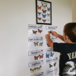 Looking for butterfly activities for kids? Check out our giant butterfly identification chart, beautiful butterfly stick bouquet, outdoor butterfly fact scavenger hunt, and much more!