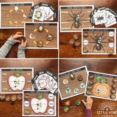 Fall Nature Anatomy and Life Cycle Activities for Kids