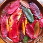 How to preserve leaves!