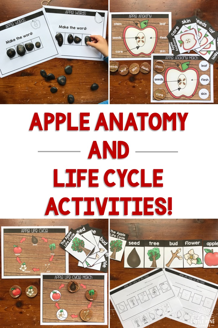 Looking for fun ways to teach fall nature anatomy and life cycles to children? Ideas for beautiful posters, matching games, vocabulary cards, cut and paste activities, and nature word building mats are all included in this post! Don't miss out on these ideas if you are teaching about apples, bats, pumpkins, turkeys, or spiders this year.