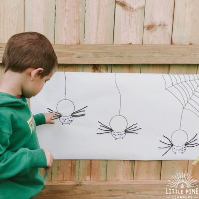 A Simple Spider Anatomy Activity for Kids