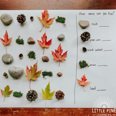 Nature Find and Count Math Activity