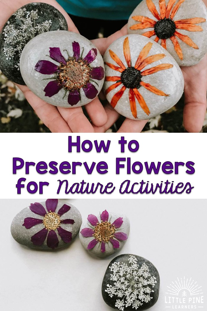 What if I told you there is a way to add flowers to your kids nature activities and there's a solid chance (I'm a realist) you can enjoy them over and over again for months if not years?!