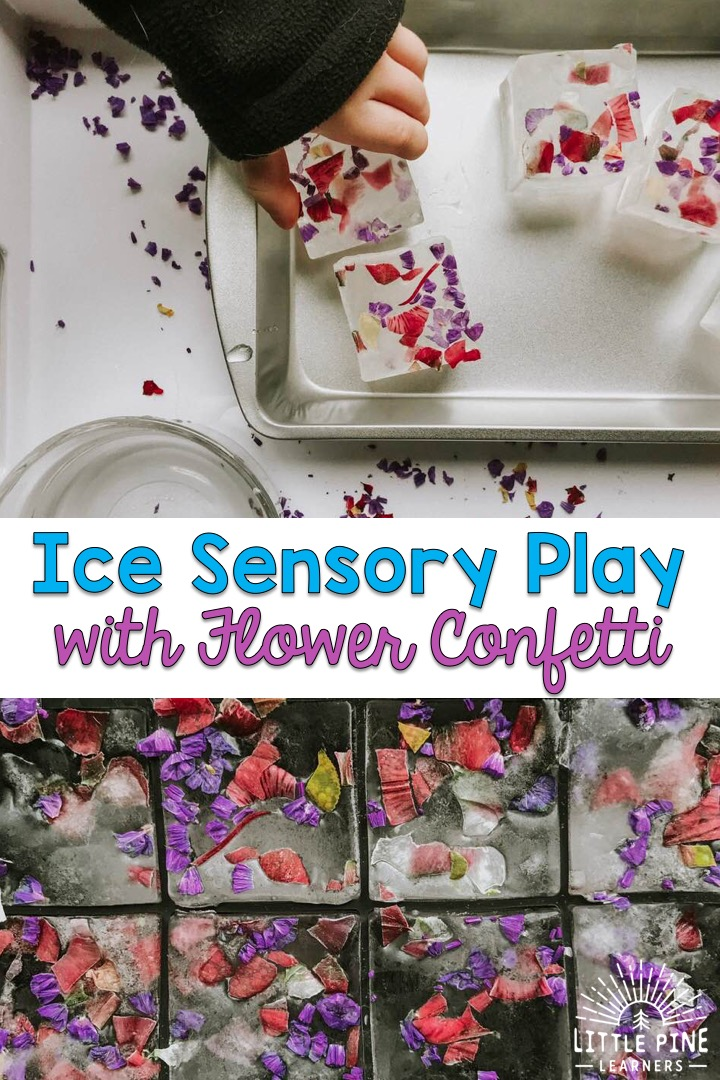 Try this ice sensory activity for an easy indoor or outdoor activity! Kids love the feel of cold ice in their hands and enjoy the challenge of freeing all of the pieces of flower confetti from the ice cubes. Give this zero waste activity a try today!