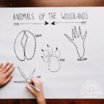 Try tracing animals tracks for a fun way to practice making curved and straight lines! In addition, kids will learn the shape of the tracks while tracing over them. Kids will love making this giant-sized animal track poster, making this activity perfect for preschoolers to big kids. Try this one today to help kids work on their pencil grip, fine motor skills, animal track identification, and more!