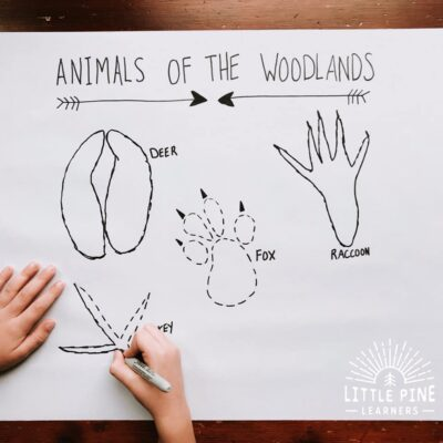 DIY Woodland Animal Track Tracing Activity