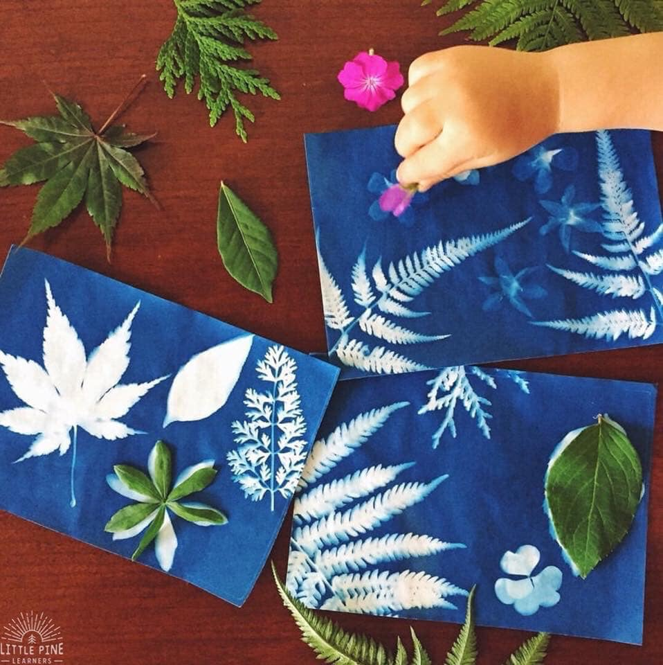 Beautiful leaves and flowers with sun print paper.