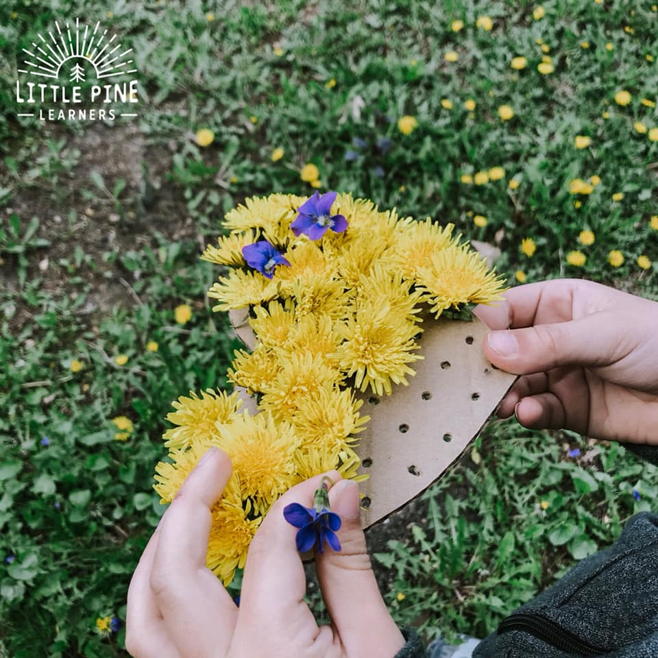 Try this fun fine motor activity this spring! Just grab a fistful of dandelions and start threading them on your DIY shape board. This is the perfect activity for reusing extra pieces of cardboard that you have laying around the house. Spring is the perfect time for nature activities, so get outside and try this one with your kids today!