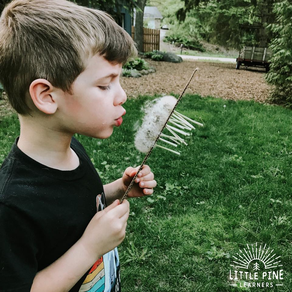 Who doesn't love making dandelion wishes?! Children are magnets to dandelion puffs and LOVE playing with them! Here is a fun outdoor activity for kids to try the next time your yard turns into a wonderland of puffy wishes.
