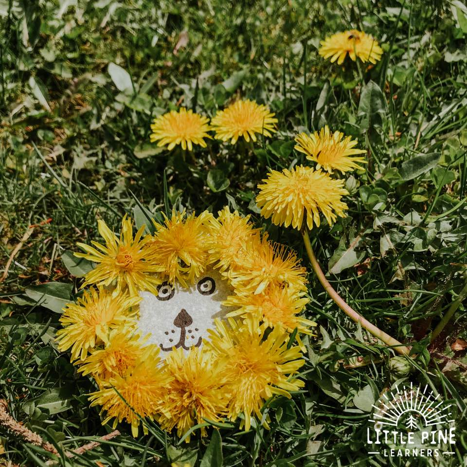 Try this simple and adorable spring craft for kids today! You just need a few supplies to make these absolutely adorable dandelion rock people. You can make just one rock person or a whole family of rock people, complete with a dandy-lion family pet;)