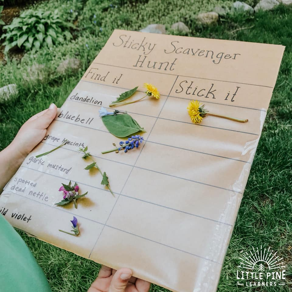 Here is a fun and easy scavenger hunt to try with your kids! This activity will help children learn nature identification right in their own backyard. Practice leaf identification in the fall and flower identification in the spring and summer! The cardboard piece is reusable for endless scavenger hunts.