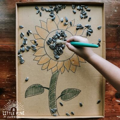 Sunflower Seed Sweep {3 Fine Motor Activities}