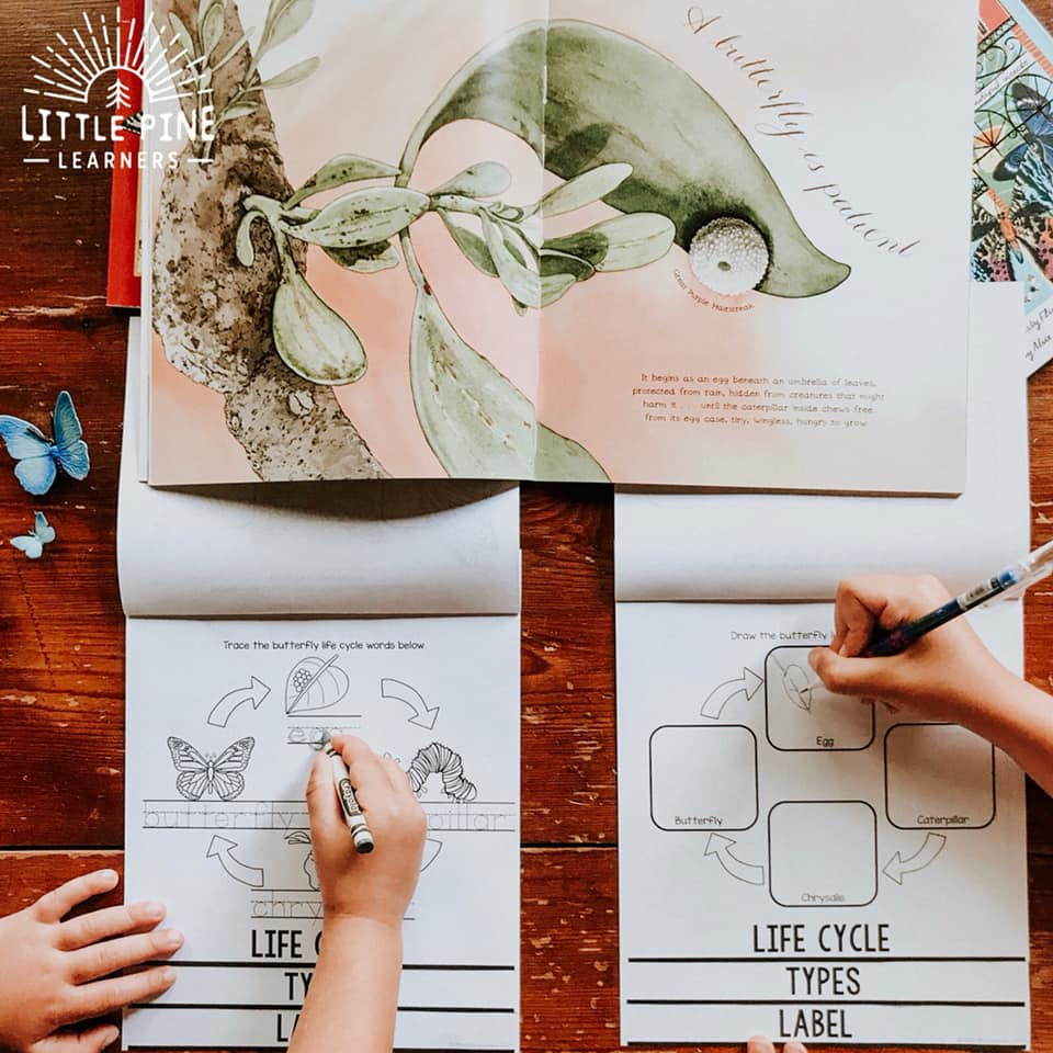 """This is an example of the """"life cycle"""" page in the All About Butterflies book. My four year old is tracing the life cycle words and 7 year old is drawing the life cycle. These books are great for homeschooling, multiage classrooms, or to meet the needs and abilities of a typical classroom!"""