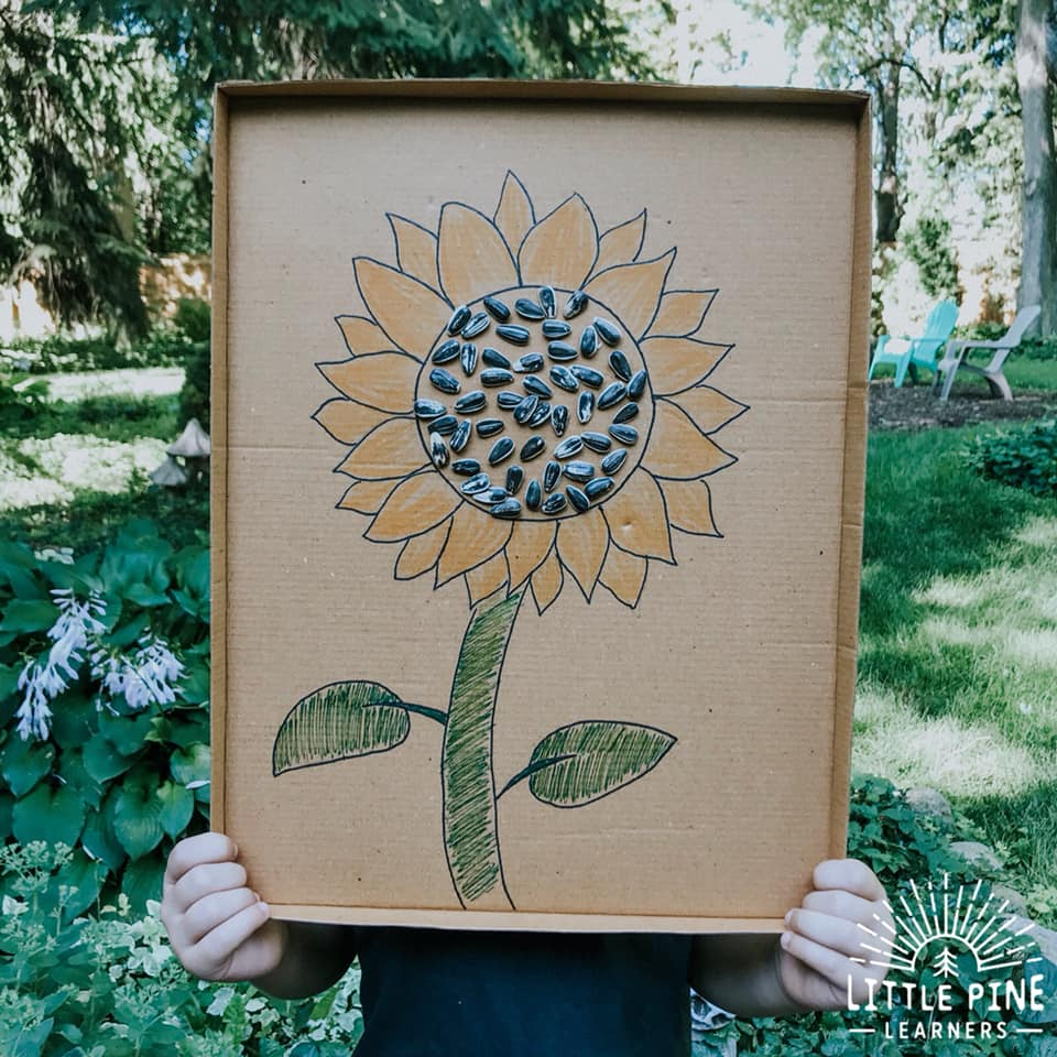Seed art for kids!