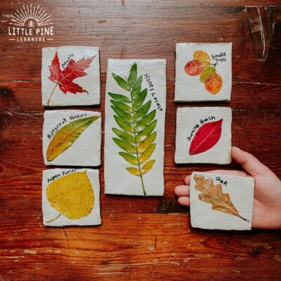Beautiful Leaf Identification Tiles