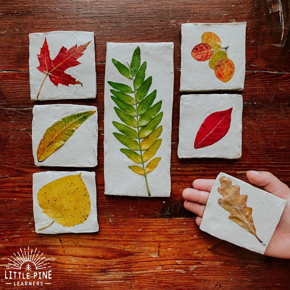 Check out this beautiful leaf identification activity for kids! These leaf tiles are the perfect addition to any nature table and offer a realistic visual of the different types of leaves. These are so easy to make and look beautiful when complete!