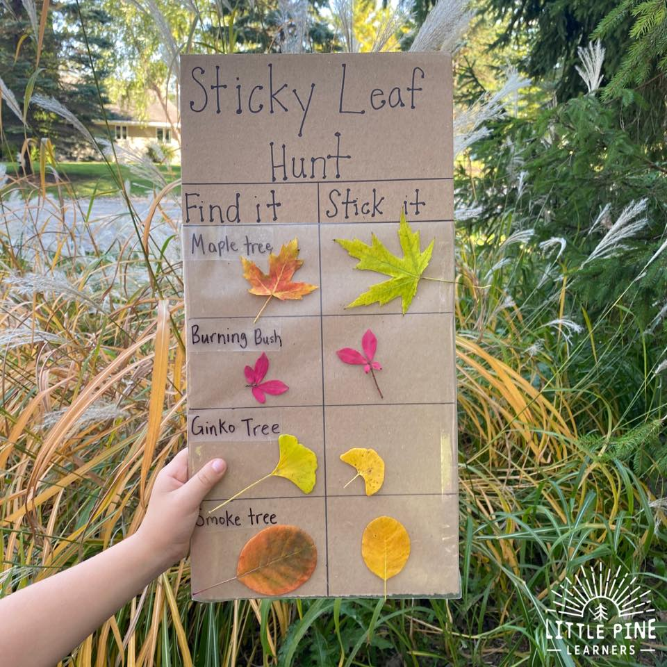 Here is an simple and fun outdoor activity for fall! This is so easy to set up and kids will LOVE searching for their favorite leaves. This activity is awesome for teaching children nature identification at a young age and will help them learn the shapes of different types of leaves.