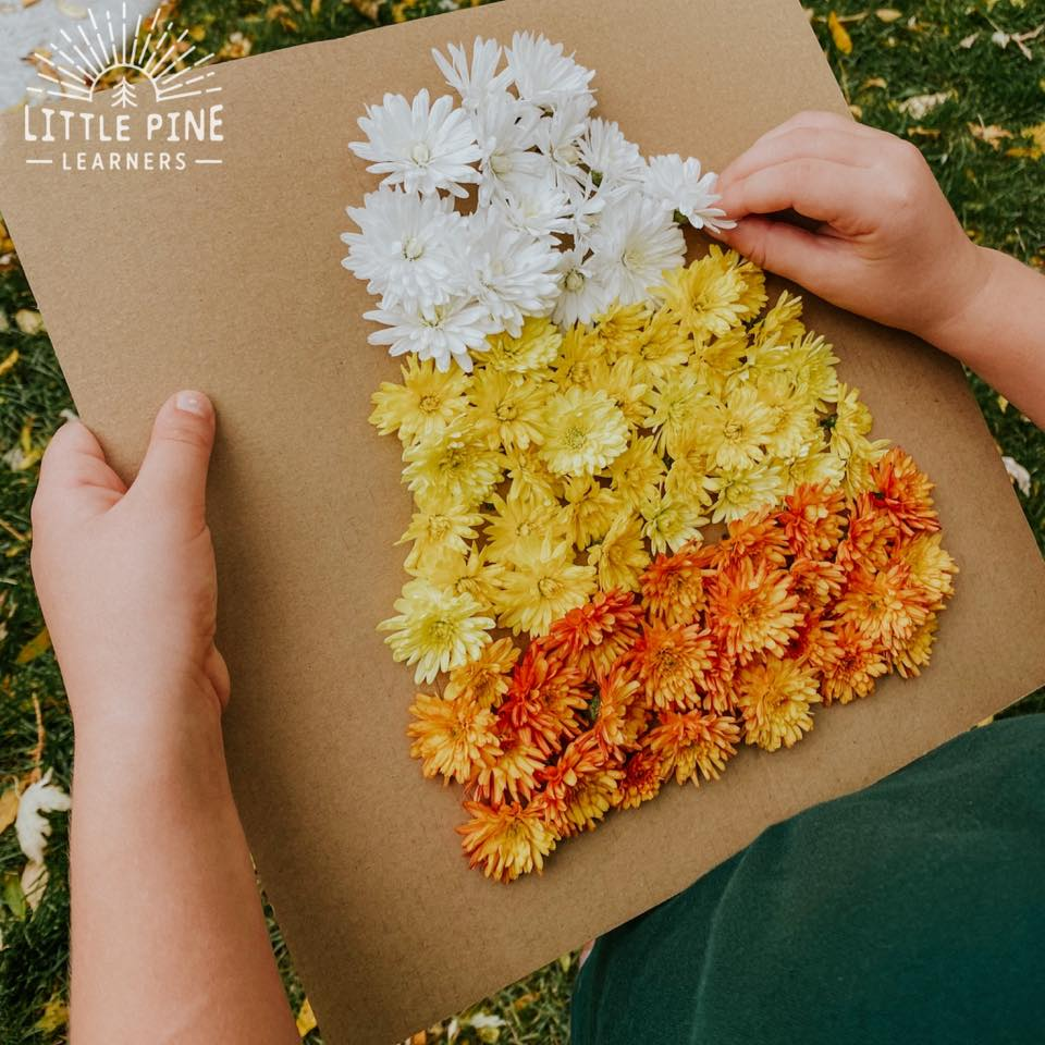 This is the perfect fall activity for kids if you have mums on your front porch! Just grab some white, yellow, and orange mums to make this sweet candy corn picture. This low-prep activity will keep kids entertained for a long time and the finished picture is adorable!