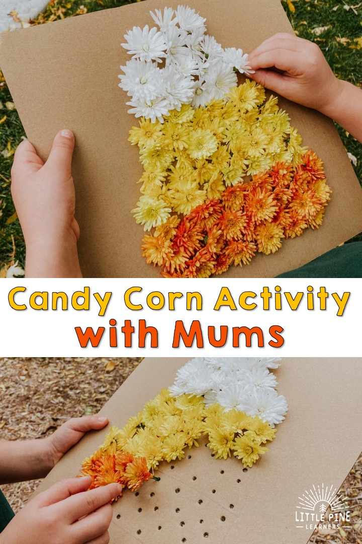 This is the perfect fall activity for kids if you have mums on your front porch! Just grab some white, yellow, and orange mums to make this sweet candy corn picture. This will keep kids entertained for a long time and the finished picture is adorable!