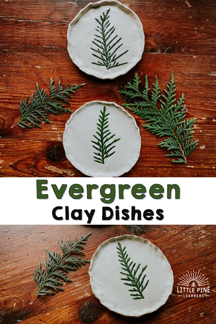 This beautiful evergreen clay dish is the perfect DIY decoration or handmade gift for the holidays.