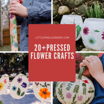 20+ Beautiful Pressed Flower Crafts